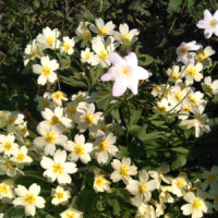 The Poetry Place #3 – Easter Special – Spring Hope: Poems for Now – 29/3/20